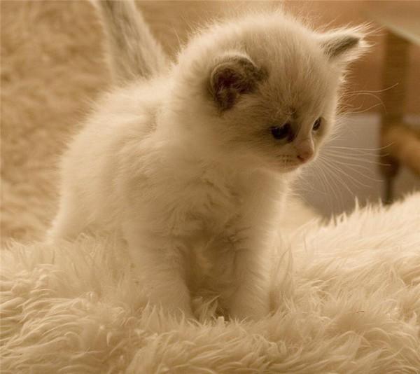 Толкование снов про котят