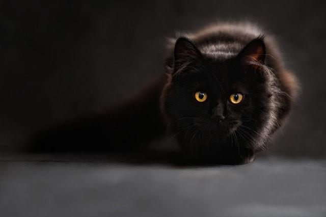 Так что всегда, при всей своей очаровательности - коты, кошки и котята во снах превещают неприятности и проблемы. Мужчинам - предательство со стороны женщин. А женщинам - риск того, что они окажутся в неприятной ситуации, которая нанесет вред их репутации