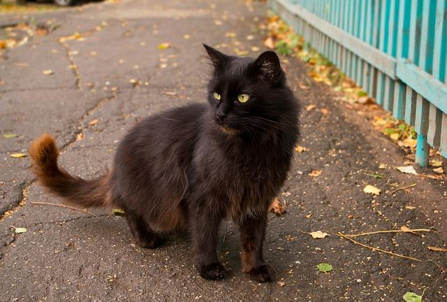 Сонники: если снится черная кошка, нужно внимательно отнестись к своему здоровью.