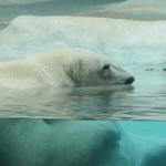 Сонник: к чему снится медведь