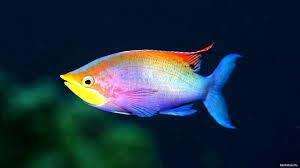 К чему беременной снится рыба?